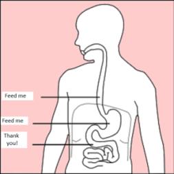 Stomach_diagram_feedme
